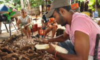 Secretaria da Agricultura realiza Dia Técnico da Mandiocultura na região Central do Estado