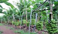 Governo do Tocantins realiza workshop on-line voltado aos produtores de fruticultura