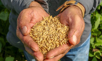 Ciência contribui com o avanço da produção de arroz no Tocantins
