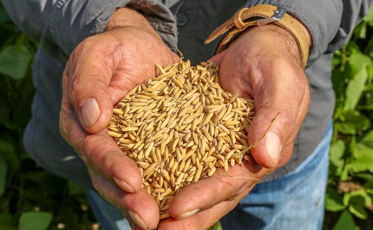01 . Agricultura do Tocantins tem tido investimentos científicos com apoio do Governo por meio da FAPT e Unitins - Katriel Bernardes.jpg