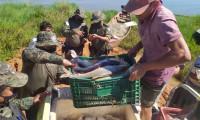 Adapec e Guarda Metropolitana de Palmas apreende 500 Kg de pescado impróprios para o consumo no lago da capital