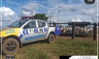 Patrulha Rural da PM reduz índice de criminalidade no campo