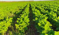 Adapec prorroga para até 5 de junho o plantio da soja nas Planícies Tropicais