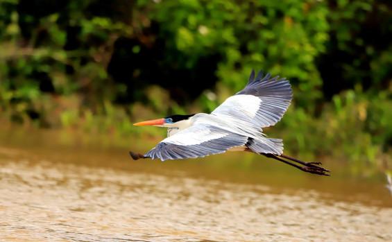 Na semana do Dia Mundial do Meio Ambiente, Governo do Tocantins destaca garantia da preservação da biodiversidade pormeio das Unidades de Conservação