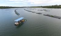Tecnologias sustentáveis da Embrapa para criação de peixes estarão na Agrotins 2021