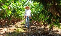 Ruraltins mostra experiência de sucesso no cultivo de cacau, café e pimenta-do-reino na Agrotins 100% digital