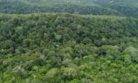 Readequação do Plano de Prevenção e Controle do Desmatamento e Queimadas do Tocantins é aprovada em Câmara Técnica do Coema