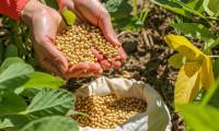 Tocantins investe em estudos científicos na área do agronegócio