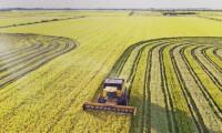 Agrotins 2021 100% Digital traz um panorama do cenário atual da produção e da comercialização de arroz no Tocantins