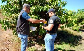 Adapec defende o controle da mosca da carambola para produção frutífera no Tocantins durante a Agrotins 2021 100% Digital