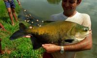 Ruraltins realiza encontro sobre piscicultura em Novo Acordo
