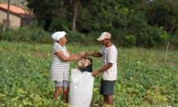"""Em live realizada nesta quarta-feira, 21, Seagro debate o tema """"Novas Perspectivas para Agricultura Familiar no Tocantins"""""""