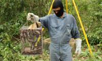 Equipe da Adapec do programa de controle da raiva dos herbívoros estará atuando na região de Pedro Afonso