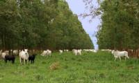 Seagro alerta produtores sobre a alimentação de animais em período de estiagem