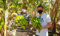 Com apoio do Ruraltins, produtores de banana investem em tecnologia para aumentar produtividade em menor área de cultivo