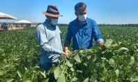 Dia de Campo mostra alternativas para produção de sementes de soja em sistema de irrigação por gotejo subsuperficial
