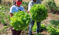 Com assistência do Ruraltins, hortifruticultor urbano de Natividade vê oportunidade de aumentar produção