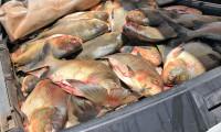 Adapec e órgãos parceiros apreendem aproximadamente 5 toneladas de pescado em Palmas