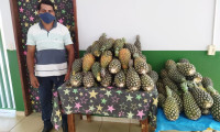 Governo do Tocantins entrega kits de alimentos da agricultura familiar em Tupirama