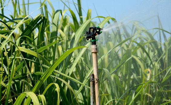 Ruraltins implanta unidade demonstrativa de milho com variedade mais produtiva