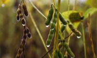 Especialistas participam nesta quarta, 15, de encontro  das Tendências Agroclimatólogicas do Tocantins para safra de grãos 2021/2022