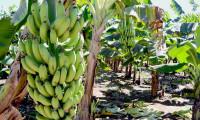 Governo do Tocantins promove capacitação técnica em fruticultura no projeto Manoel Alves
