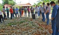 Cultivo de nova variedade de milho híbrido é apresentada em Unidade Experimental do Ruraltins
