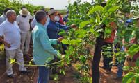 Ruraltins e parceiros encerram com sucesso capacitação em fruticultura na região sudeste do Tocantins