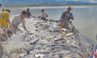Governo do Tocantins publica normas para facilitar regularização de indústrias artesanais de pescados
