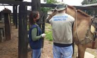 Adapec alerta municípios sobre restrições para eventos equestres e aglomeração de equídeos