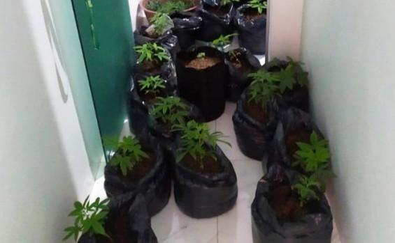 Polícia Militar fecha laboratório e apreende drogas durante o feriado em Palmas
