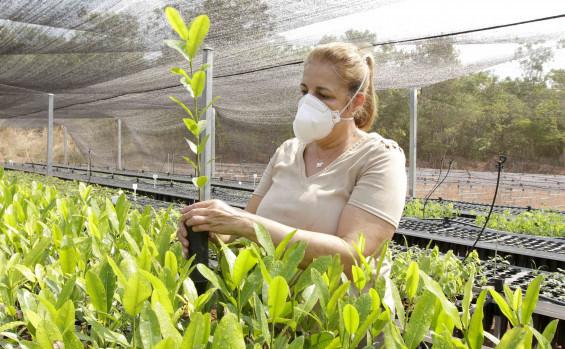 Meio Ambiente implanta viveiro de mudas nativas do Cerrado em Gurupi para recuperação de áreas degradadas