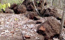 Pesquisa mapeia áreas com potencial favorável ao minério primário no Tocantins