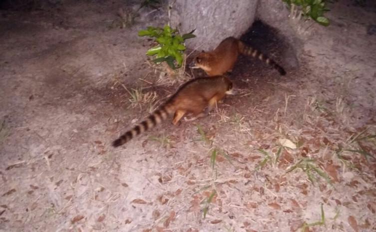 Naturatins e Cetas realizam soltura de animais silvestres